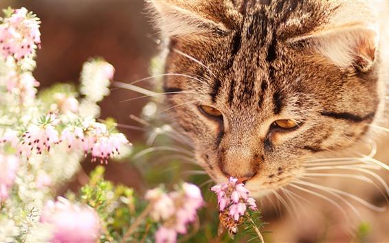 壁纸 猫嗅花