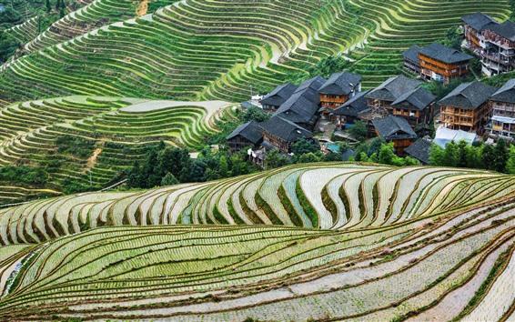 Papéis de Parede China, guangxi, longsheng, terraço, bonito, paisagem rural