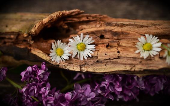 Wallpaper Daisy, purple lilac, trunk