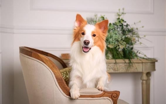 Wallpaper Dog, chair