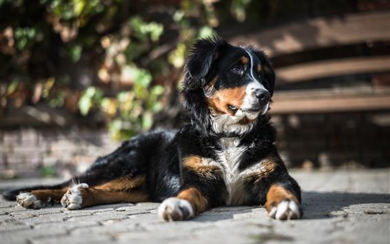 Wallpaper Dog rest, ground