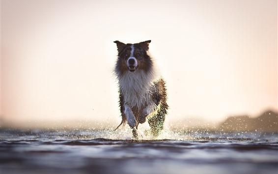 Wallpaper Dog running, water splash