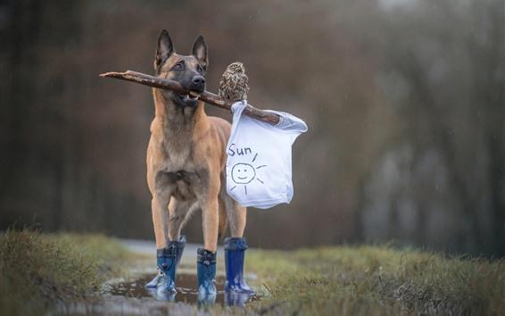 Fondos de pantalla Perro, zapatos, búho, animales divertidos.