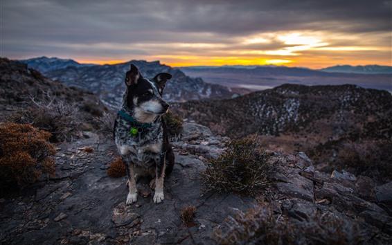 Wallpaper Dog sit on ground, mountains, sunset
