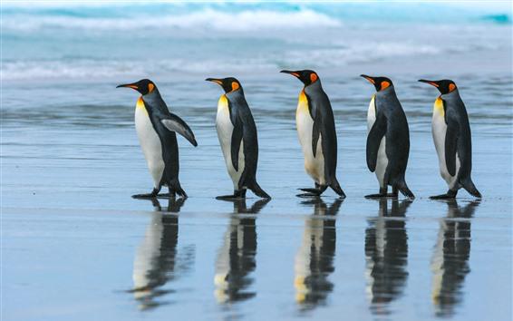 Papéis de Parede Pinguim-imperador, equipe, caminhada, mar