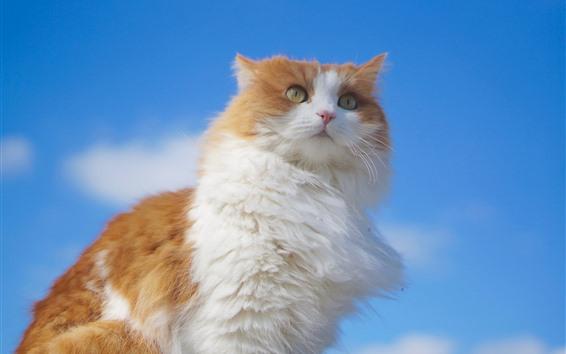 Papéis de Parede Gato fofo, céu azul