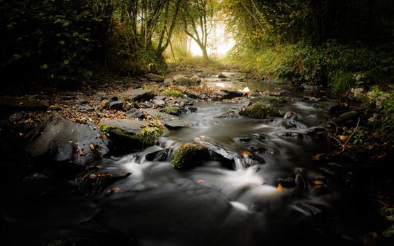 Wallpaper Forest, stream, fog, rocks