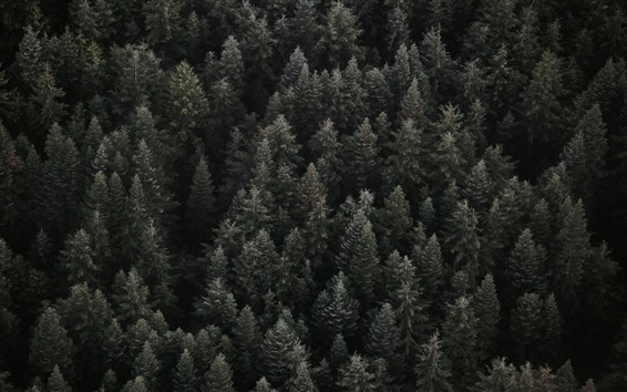 Wallpaper Forest top view, darkness