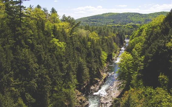 Fond d'écran Forêt, arbres, rivière, paysage naturel