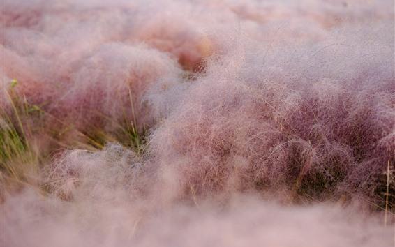 壁紙 草、ピンク、朝、水滴