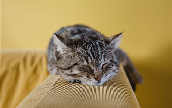 Wallpaper Gray cat sleeping