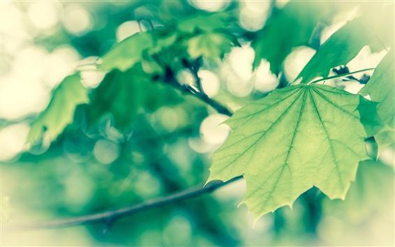 Fond d'écran Feuillage vert, brindilles, brumeux