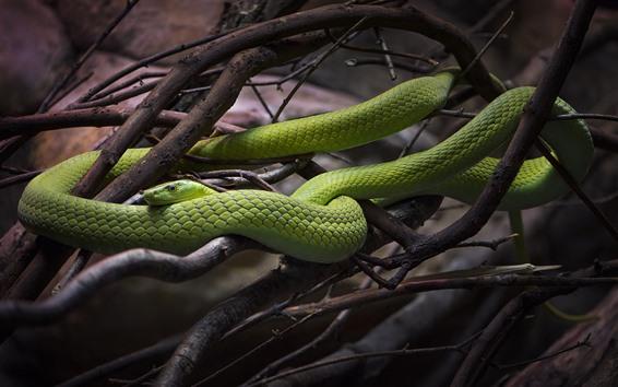 Papéis de Parede Cobra verde, galhos