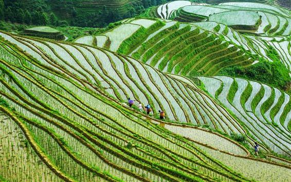 Wallpaper Guangxi Longsheng Terrace, rice fields, people, China