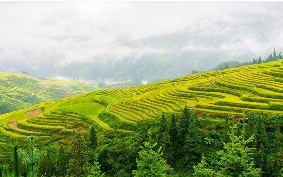배경 화면 귀주성 계단, 아름다운 풍경, 중국