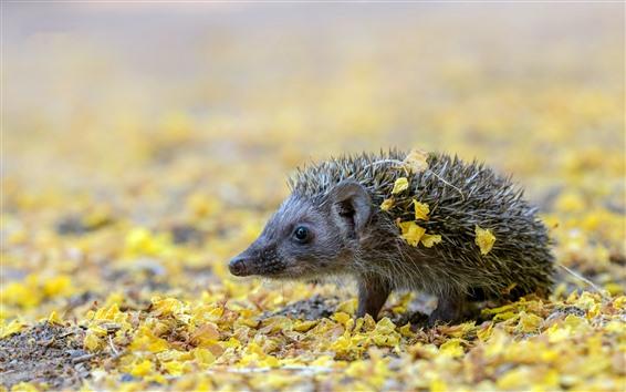 Wallpaper Hedgehog, needles, ground