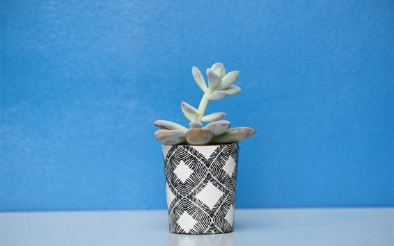 Wallpaper Houseplant, succulent plants, cup, blue background