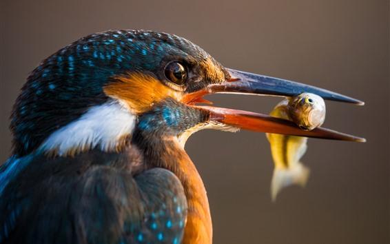 Papéis de Parede Martim-pescador, bico, pegar um peixe