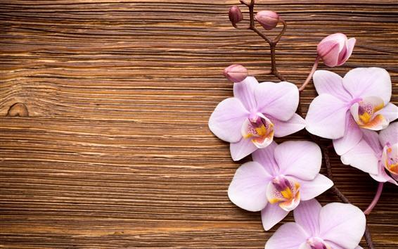 Обои Светло-розовый фаленопсис, цветы, древесная плита