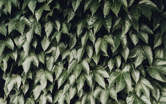 Wallpaper Many green leaves