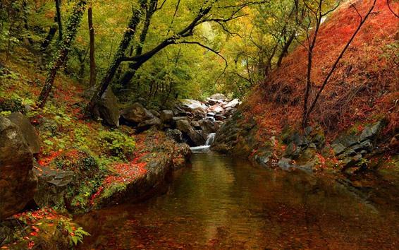 Papéis de Parede Cenário da natureza, árvores, riacho, pedras, outono