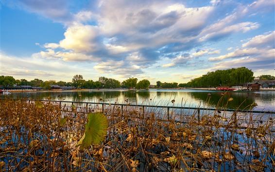 Wallpaper Park, dry lotus, lake, fence