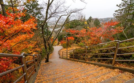 Обои Парк, деревья, ступени, высокий, осень