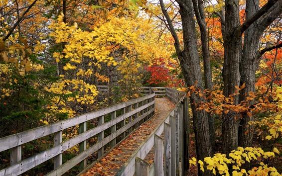Fondos de pantalla Parque, puente de madera, árboles, hojas amarillas y rojas, otoño.