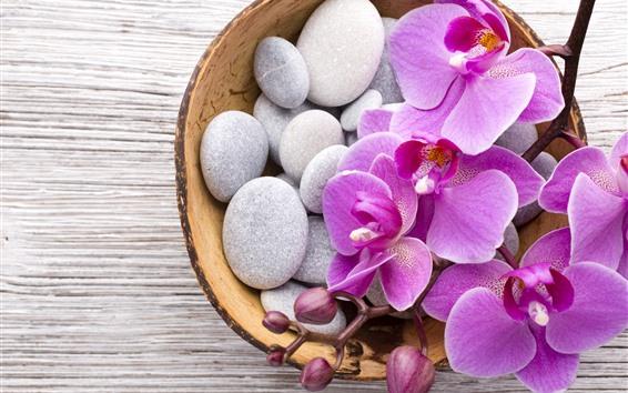 Fondos de pantalla Phalaenopsis, flores rosas, piedras, cesta