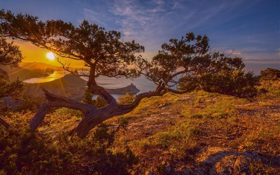 Wallpaper Pine tree, lake, sunrise, dawn