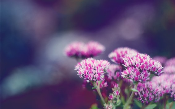 Wallpaper Pink flowers bloom, hazy, spring