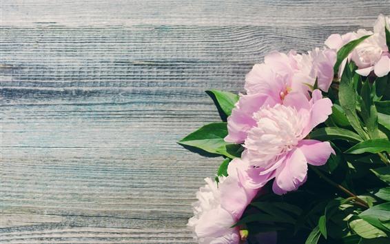 Papéis de Parede Peônias rosa, flores