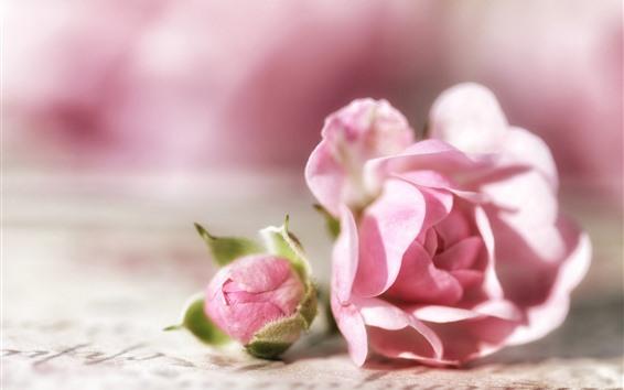 Fondos de pantalla Rosas rosas, capullo de flor, brillante.