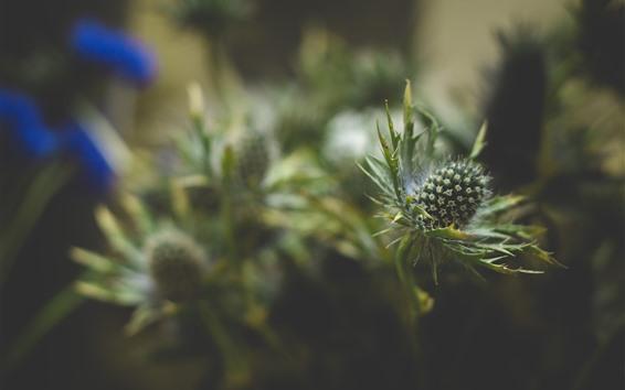 Wallpaper Plants, thorns, hazy