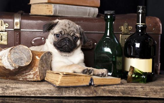 배경 화면 강아지, 책, 와인