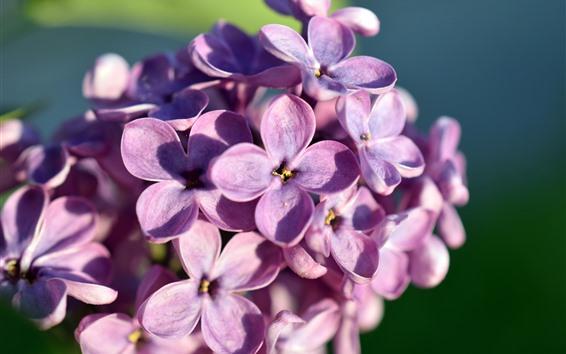 Papéis de Parede Flores roxas, lilás, pétalas