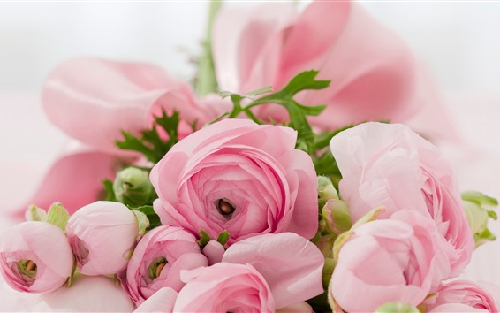 Papéis de Parede Ranúnculo, flores cor de rosa, nebulosas