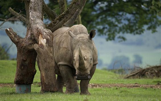Papéis de Parede Rinoceronte e árvore
