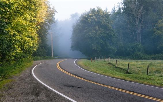 Wallpaper Road, trees, power lines, fog, morning