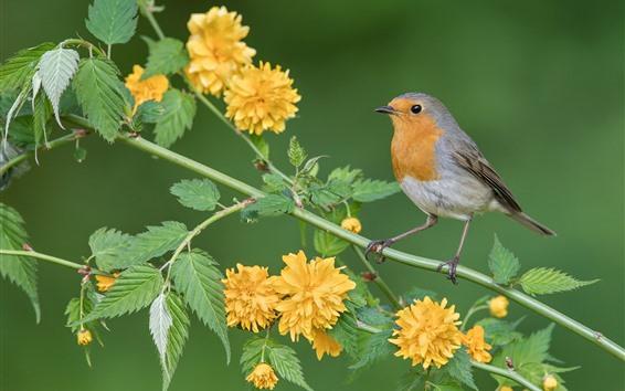 Papéis de Parede Pássaro robin, flores amarelas