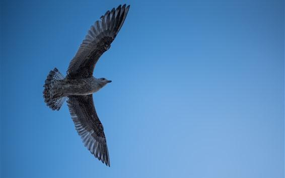 Papéis de Parede Vôo de gaivota, asas, céu