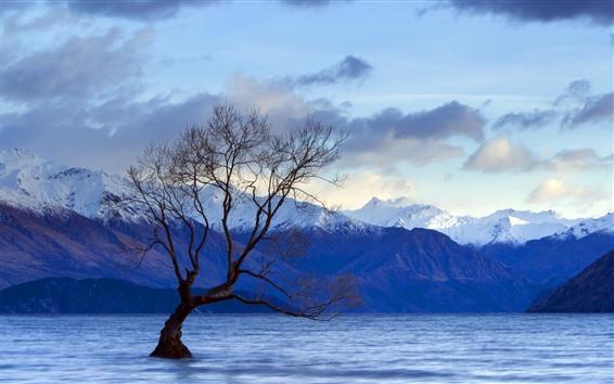 Wallpaper Single tree, lake, water, mountains
