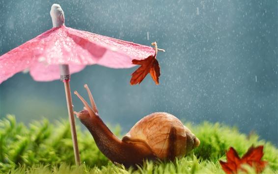 Papéis de Parede Caracol, guarda chuva, chuva, animal engraçado