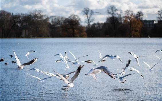 Wallpaper Some seagulls, flight, river