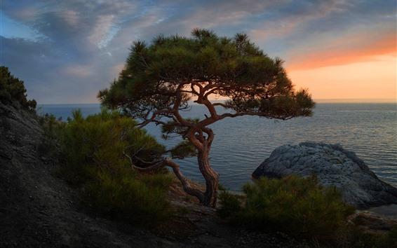 Обои Ель, одинокое дерево, море, сумерки