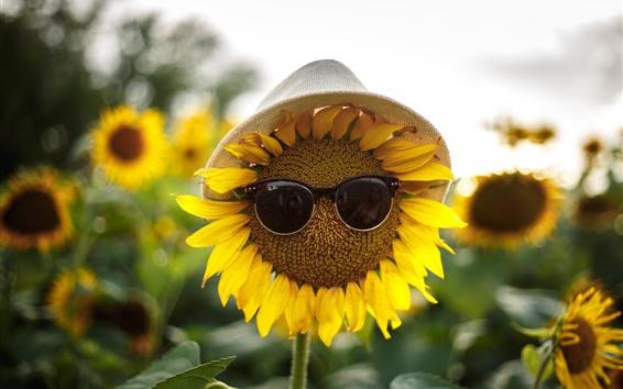 Fond d'écran Tournesols, lunettes de soleil, chapeau, image drôle