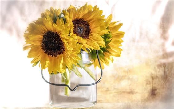 Papéis de Parede Girassóis, pétalas amarelas, vaso