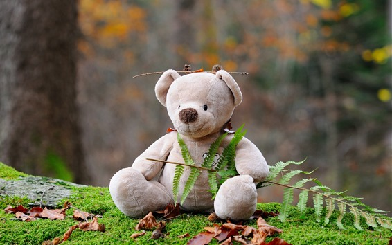 Wallpaper Teddy bear, toy, fern leaves