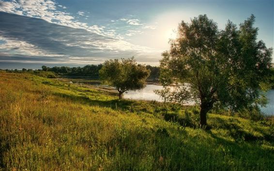 Papéis de Parede Árvore, prado, lagoa, raios de sol, verão