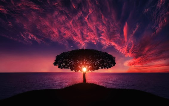Wallpaper Tree, sea, red sky, clouds, sunset